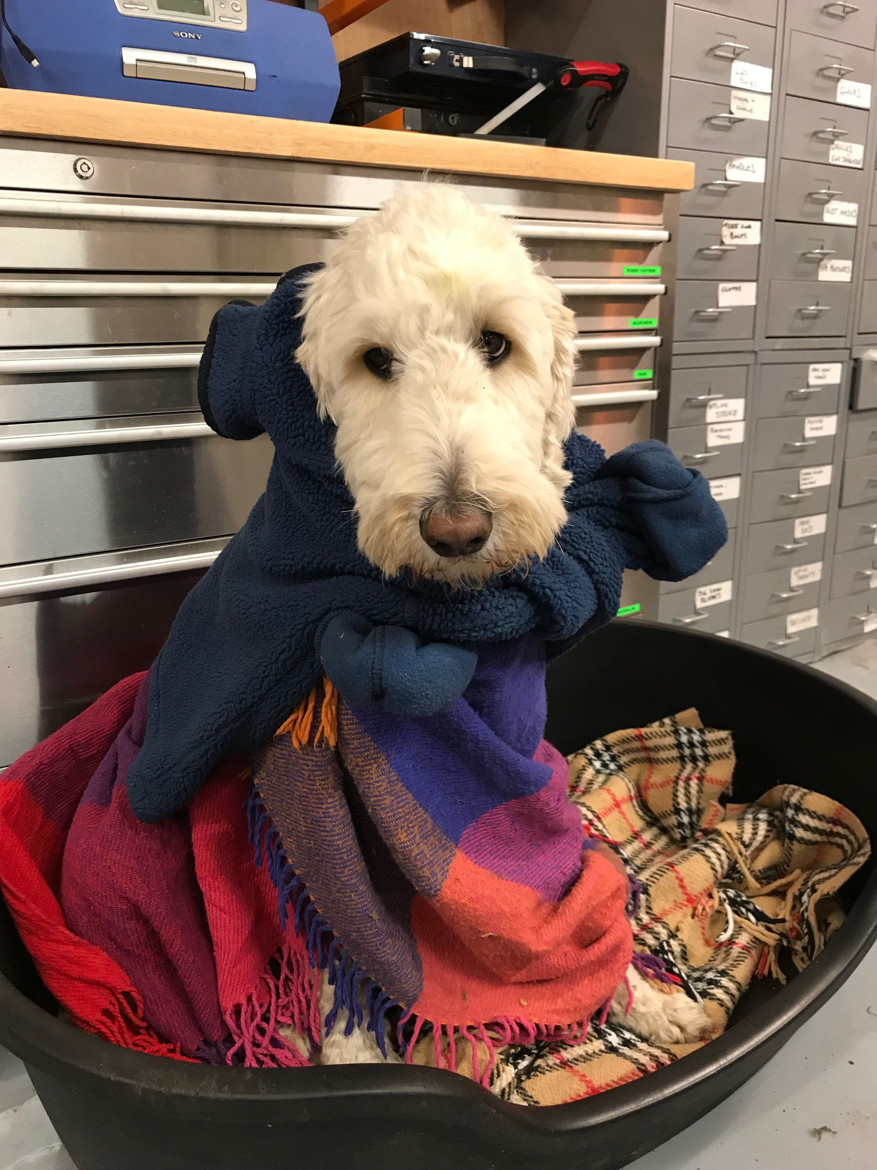 Benji the JK dog, joins in the spirit of 'social distancing' along with Mark in their workshop